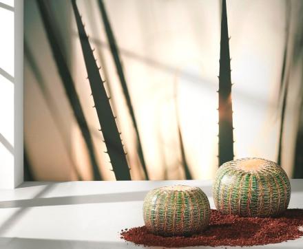 puff-cactus-04
